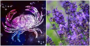 Essential Oils To Enhance Your Zodiac Sign