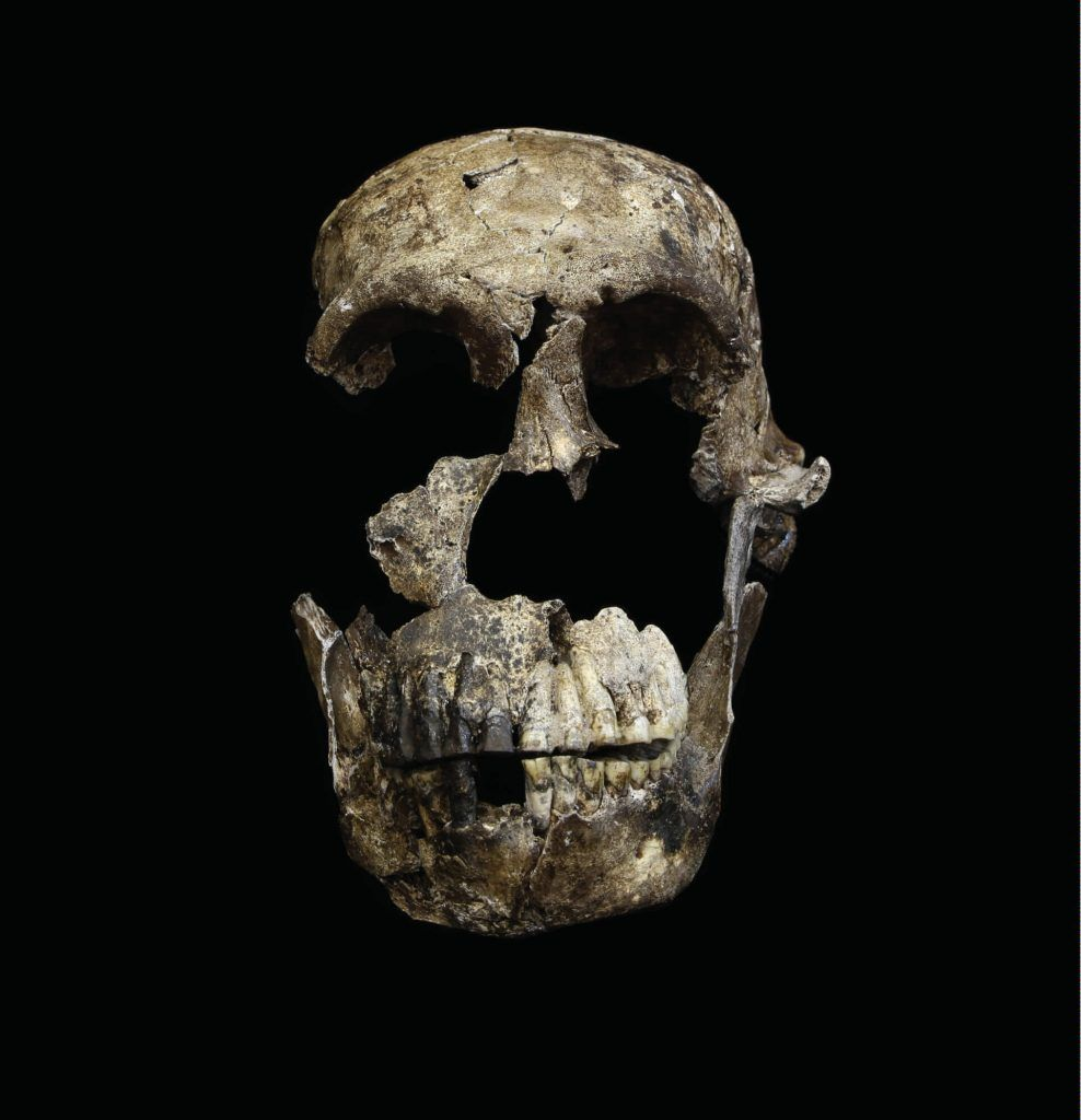 Uncovering The Mystery Of Human-Like Species - Homo Naledi