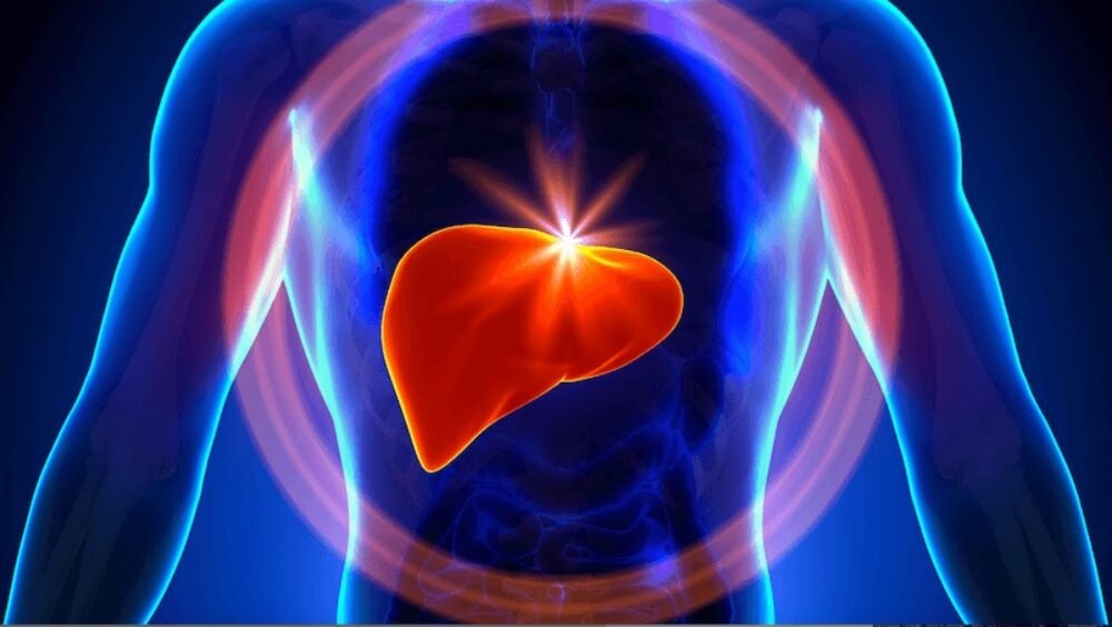 The Liver Grows By Day, Shrinks By Night, Study Reveals