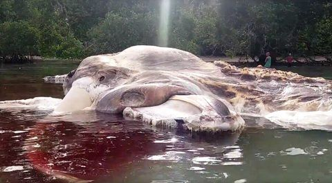 Mysterious Monster Carcass Washed Up On Indonesian Beach