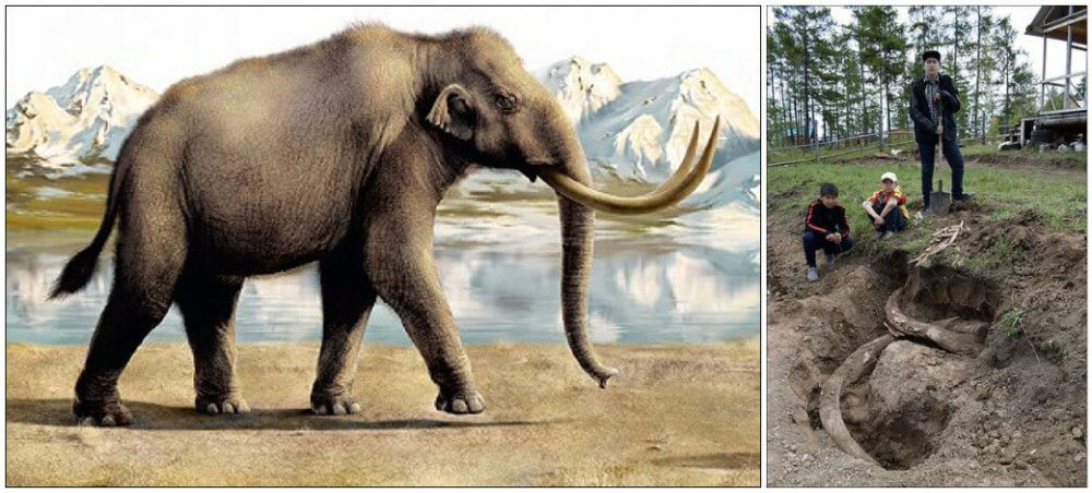 400,000 -Year-Old Steppe Mammoth Tusks Found By Villager In His Private Garden