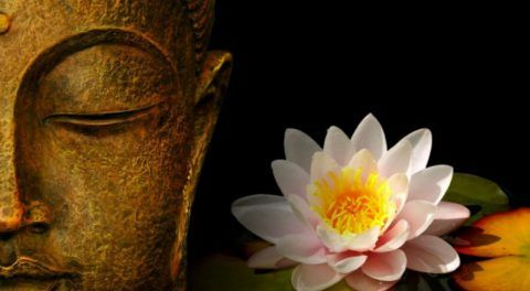 The Divine Lotus Flower: Symbolism And Meaning