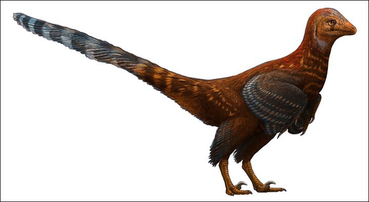 100 Million-Year-Old Dinosaur Egg Found In Russia 'Helps Prove Evolution Of Modern Birds'