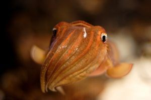 Octo-Mum: Woman 'Becomes Pregnant In The Mouth' With Baby Squid