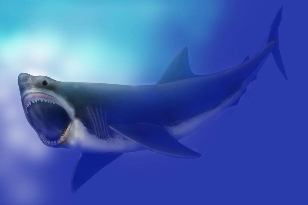 Megalodon May Have Been Wiped Out By An Ancient Star Explosion